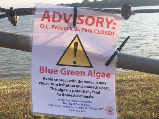 0106-algae-1.jpg
