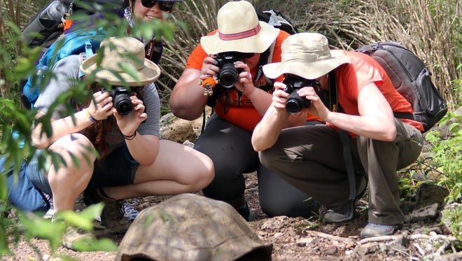 Students photograph a giant tortoise on the Galapagos Islands.