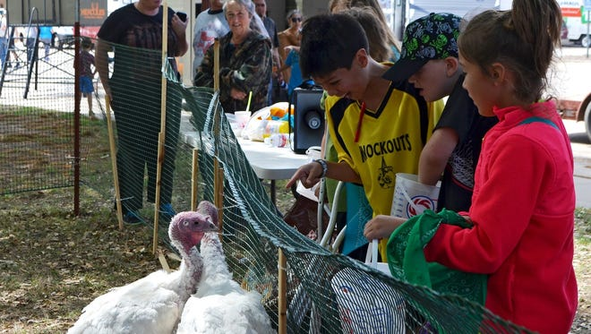 Young competitors hang out with a few turkeys at Turkey Fest in 2015. This year's Turkey Fest began earlier in the week with celebrity hunts and culminates April 8 with music, turkey races, food and games around the Henrietta courthouse square.