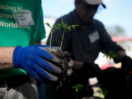 Volunteers Mark Trask, left, Ahmed Chanda, right, repot moringa seedlings at Echo in North Fort Myers on Tuesday, December 19, 2017.