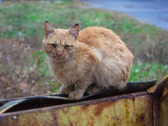 feral cats stock