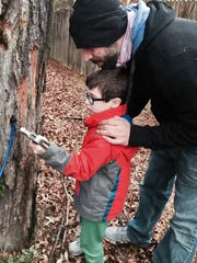 Chef Phil Manganaro and his son Dean tap a tree for maple syrup this winter.