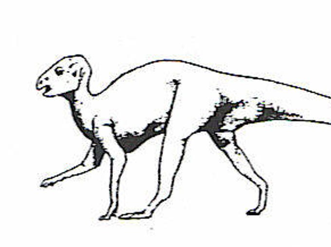 Artist drawing of an Atreipus.  Length of the animal