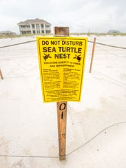 A nest of rare Kemp's ridley sea turtle eggs is roped