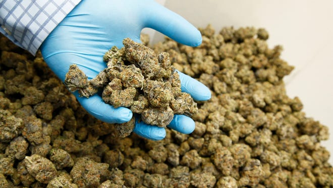 Cannibus blooms in a curing room at a Northern Arizona facility owned by Harvest of Tempe, a medical marijuana dispensary on Thursday, Oct. 23, 2014. (Edit Note: We cannot publish location)