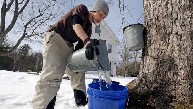 Parker's Maple Barn employee Kyle Gay pours maple tree sap into a larger bucket, in Brookline, N.H.