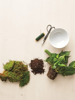 To make a kokedama, which is a moss ball usually suspended by a filament, you need a plant and a few ingredients and tools.