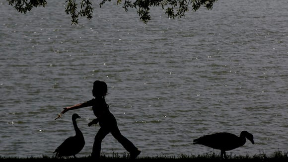 A girl feeds geese at Blount Cultural Park on Sunday, April 5, 2015, in Montgomery, Ala.