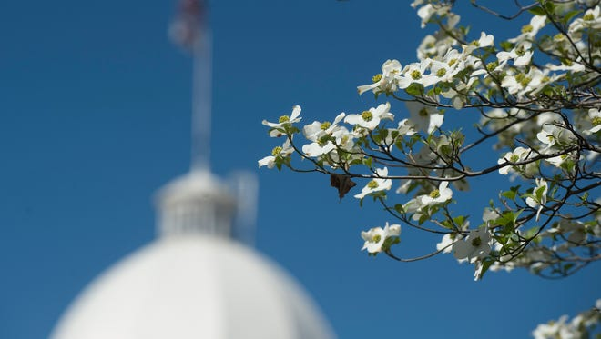 Dogwood blooms outside the Alabama State Capitol building on Wednesday, March 8, 2017, in Montgomery, Ala.