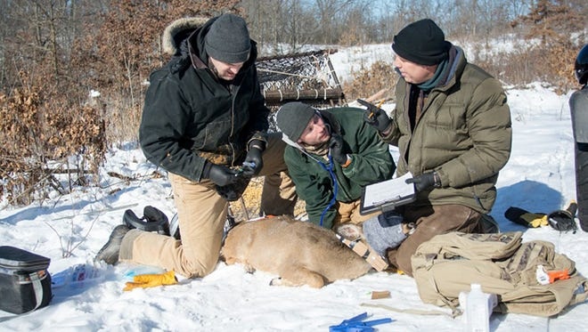 Fall 2016 kicked off the early stages of the Southwest Wisconsin CWD, Deer and Predator Study.