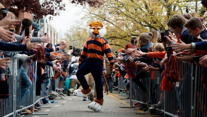 Auburn walks during Tiger Walk before the Iron Bowl NCAA football game between Auburn and Alabama on Saturday, Nov. 25, 2017, in Auburn, Ala.