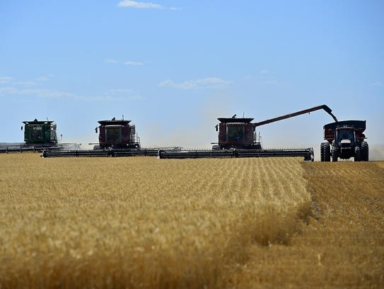 The winter wheat harvest gets underway at the Lonesome