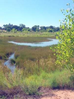 This wetlands in New Mexico recently was declared a conservation easement.