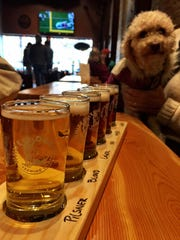 FAL 1206 Beer Bozeman White Dog