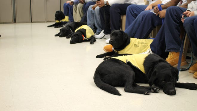 Service dogs await a graduation ceremony from the America's VetDogs program Feb. 9, 2016 at the Eastern Correctional Institute in Westover, Maryland.