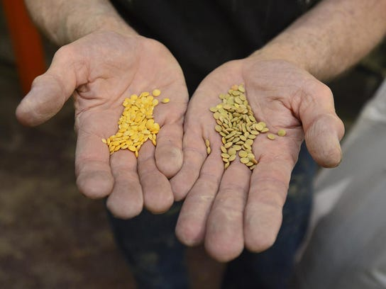 Pictured here are Timeless Natural Food's yellow lentils;