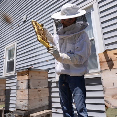 Bee ban and raising chickens on tap for Delta Township