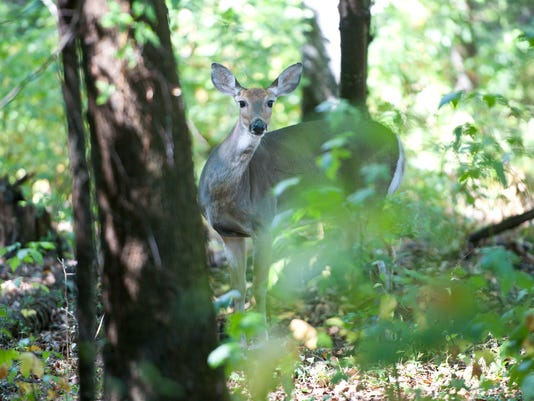 Flat Rock Brook Deer