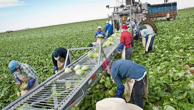 The number of non-citizen agricultural workers in Arizona has nearly double over the past five years, following a similar national trend. The H-2A program continues to grow, with farms in Yuma being a lead employer.