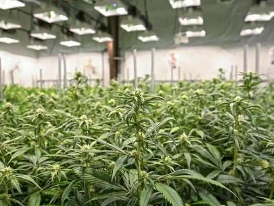 how to get medical marijuana in melbourne