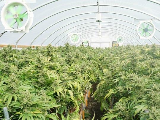 marijuana-commercial-grow-cannabis-pot-weed-legal-getty_large.jpg