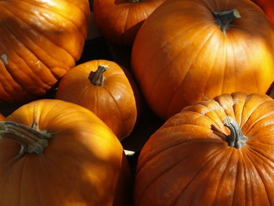 Pumpkins are the signature of the Thanksgiving season,