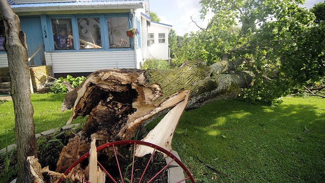 Betsy Lavinder looks out of the window of her enclosed porch at damage caused by winds Wednesday evening that took down this tree narrowly missing her home on Township Road 2102 in Ashland County but demolished a deck that was at the side of the home is seen here Thursday morning.