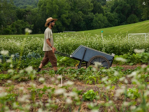 Ben Samuelson, who is on a fellowship with the Allegheny Mountain School, pushes a wheelbarrow between rows of crops he tends at the Virginia School for the Deaf and the Blind in Staunton on Monday, June 23, 2014.