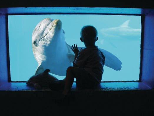 10Best readers voted for their favorite Florida attractions, and Clearwater Marine Aquarium, home of Winter the Dolphin, took home the top prize.