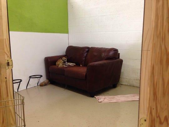 shelter dog flooding