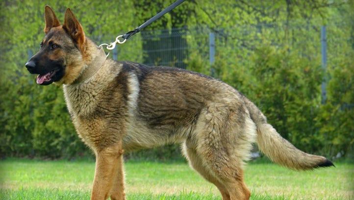 Michigan police dog killed after 11 days on job