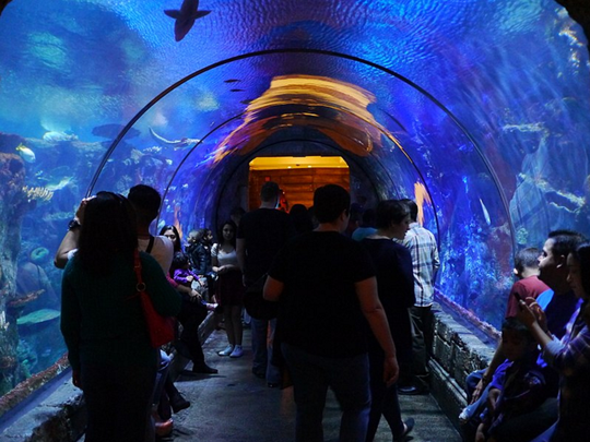The Shark Reef at Mandalay Bay in Las Vegas. (kennejima, Wikimedia Commons)