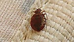 Cincinnati is at No. 8 on Orkin's 2015 list of the top 50 cities plagued by bedbugs.