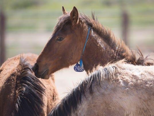Kill Wild Horses Federal Advisory Committee Says Too Many