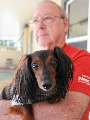 Volunteer Dave Rose recently adopted George, a 9-year-old miniature long-haired Dachshund, from the Titusville SPCA location. SPCA of Brevard will hold its 6th Annual Dancing for the Paws Denim & Diamond Collars Gala on Jan. 23 in Viera.