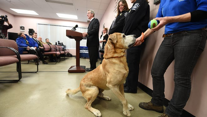 Dawson the dog waits for a ball from SPCA staff member Steph McCoy during a news conference. He was found as a stray in Dover, but his owner has not been found. Pennsylvania Agriculture Secretary Russell C. Redding spoke at the York County SCPA Friday, encouraging people to get their dogs licensed. Last year the York County SPCA took in 757 stray dogs. Only 346 were returned.