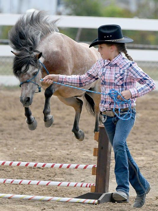 mini-horse-1.jpg