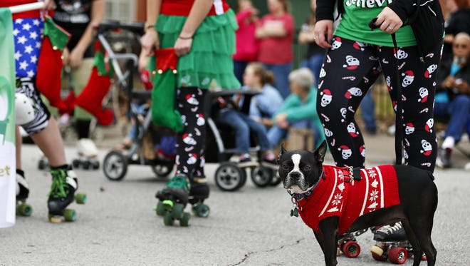 How could you cancel this? A Boston terrier named Bruce waits with the Springfield Roller Girls for the start of the 50th Downtown Springfield Christmas Parade on Dec. 11, 2015. Some members of the public had a mix-up when they read a Springfield, Oregon website about a parade being cancelled in that city.