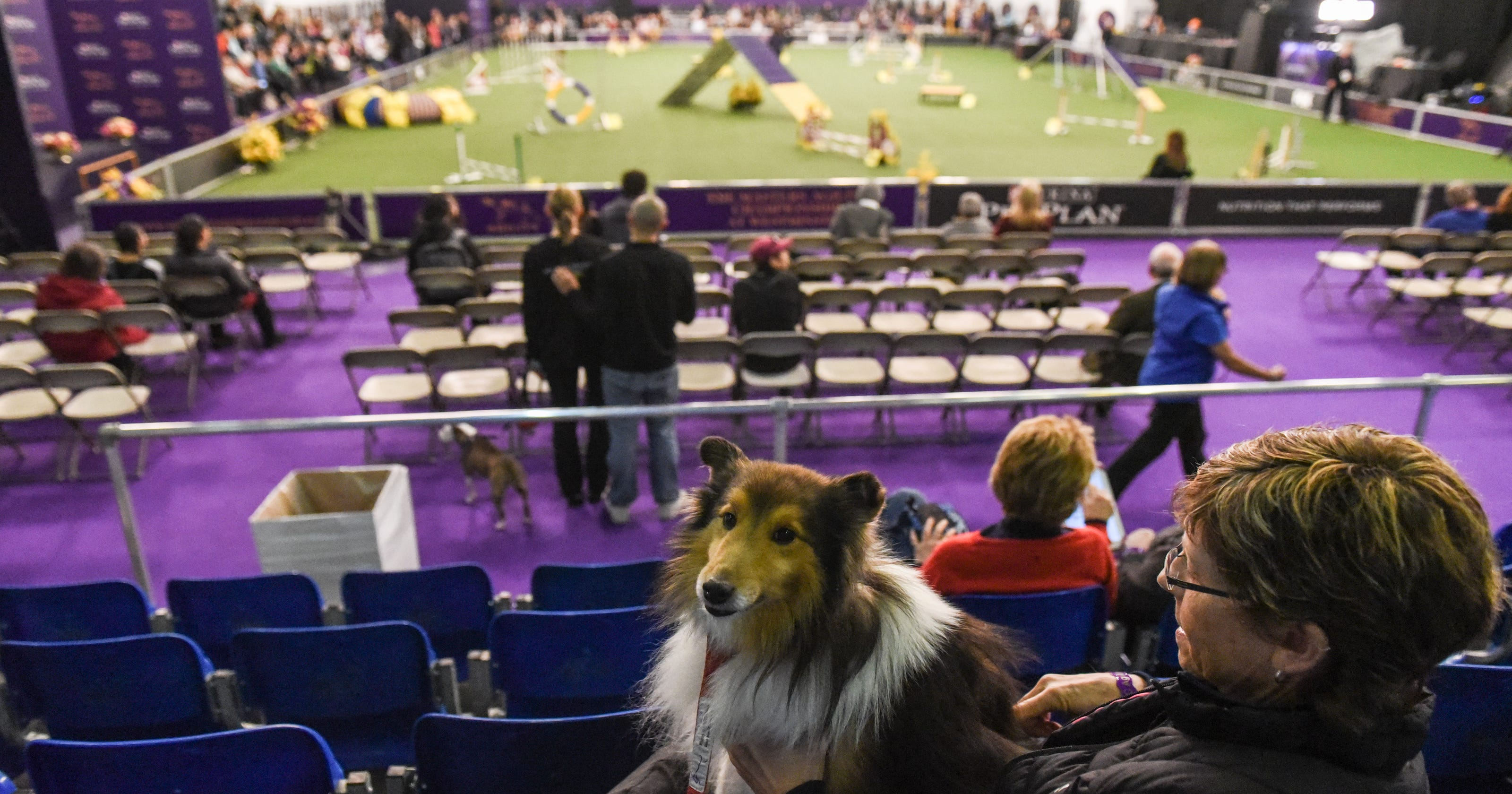 The Westminster Kennel Club agility competition for 2018