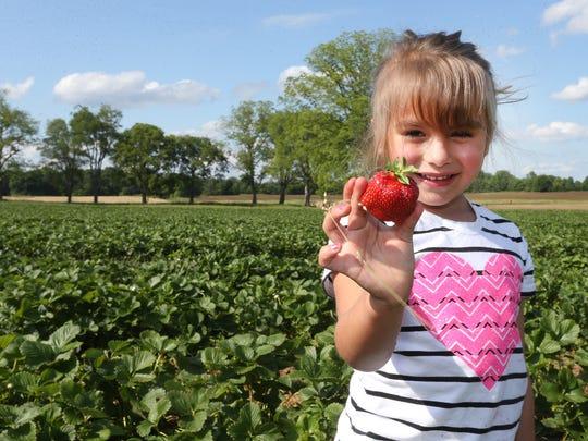 Maggie Banda shows off a strawberry she picked at Batey Farms in 2016. The 2019 you-pick berry season at the farm opens Tuesday.