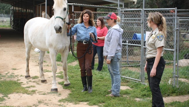 Tommy the horse is pictured (left to right ) with his new owner Anne Scioscia, equine specialist Christie Tracy, humane officer Kendra Winwood  and veterinary assistant Christina Malleck on Friday after he was adopted at the Humane Society of Ventura County in Ojai.