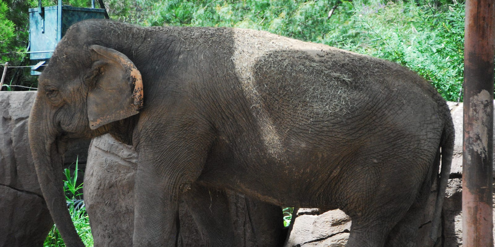 El Paso Zoo elephant Juno completes her fourth cancer treatment, doing well