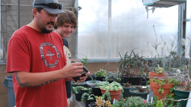 San Juan College student Kenneth Trujillo handles a crown of thorns plant with student Wayne Gransky  on Thursday in the college greenhouse.