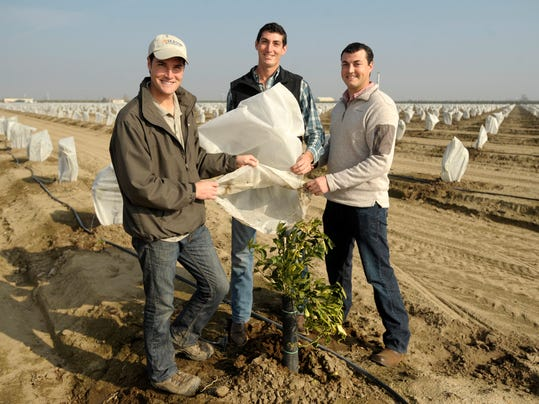Visalia brothers 39 bag protects trees from frost damage - Protecting fruit trees in winter ...