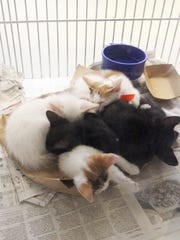 Kittens curl up together in the Cats Area of the city's