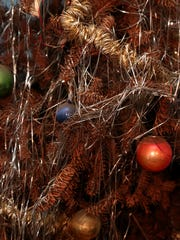 WDH 1224 Old Tree 02