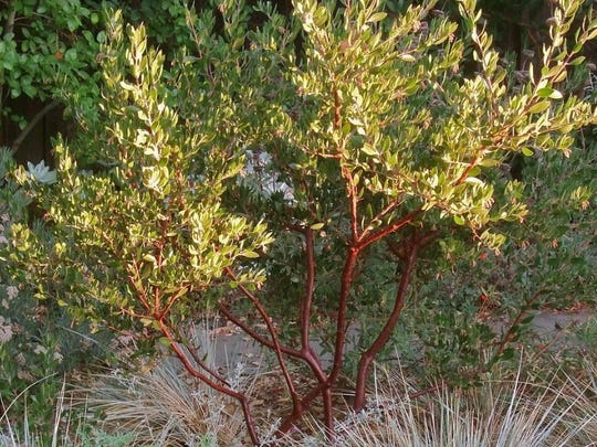 A strong feature of drought tolerant plants is their relatively small leaves