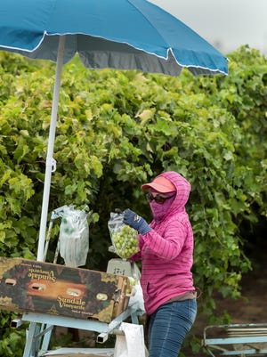 Leticia Tapia packs seedless Ivory grapes for Sundale Vineyards on Thursday, Aug. 3, 2017. Recent heat waves and humidity have reduced the number of hours per day crews can work.