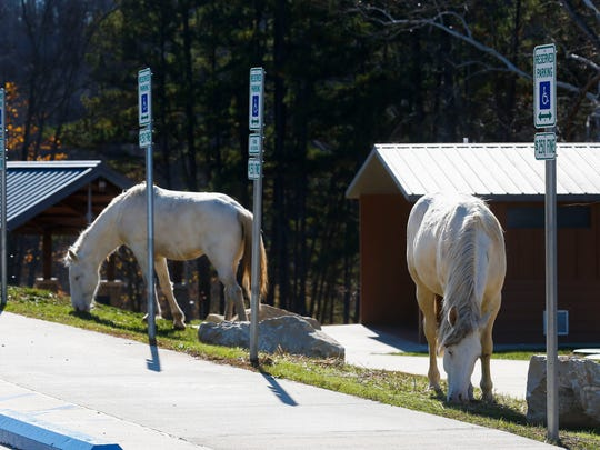 Wild horses graze near the lodge at Echo Bluff State Park on Thursday, Nov. 16, 2017.