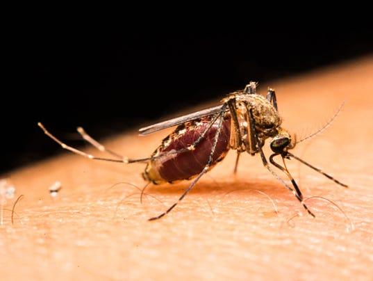 mosquito image zika